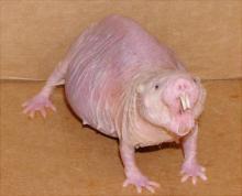 5 ყველაზე უცნაური ცხოველი მსოფლიოში