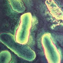 10 ყველაზე საშიში, ისტორიაში შესული დაავადება, რომელთაც გაანადგურეს მილიონობით ადამიანის სიცოცხლე