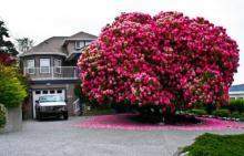 თექვსმეტი უმშვენიერესი ხე დედამიწაზე, რომელთა ხილვისას თავი  ზღაპარში გეგონებათ