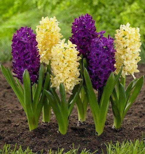 ვინ იცის რა ქვია ამ ყვავილებს?