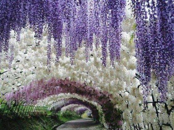 ყვავილების გვირაბი, იაპონურ ბაღ კავატი ფუძში
