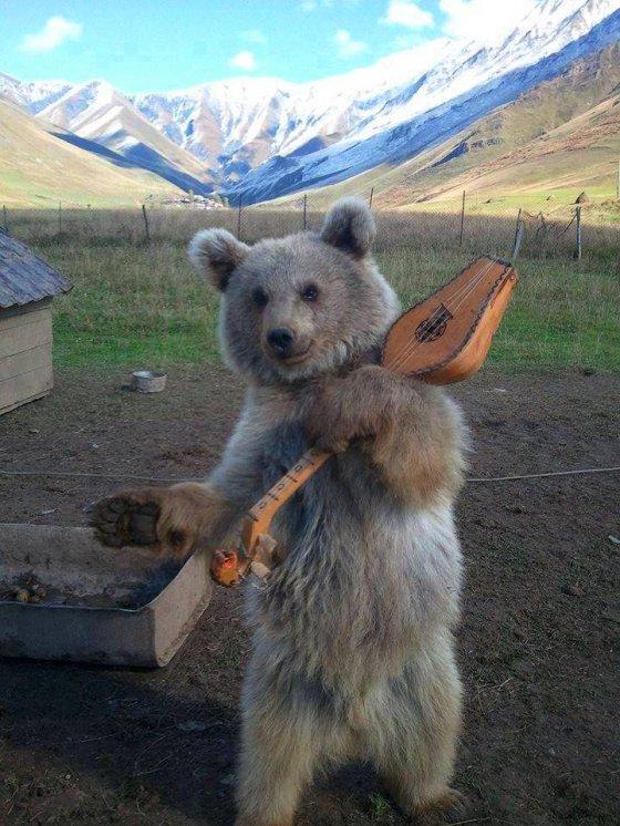 ქართველი დათვი