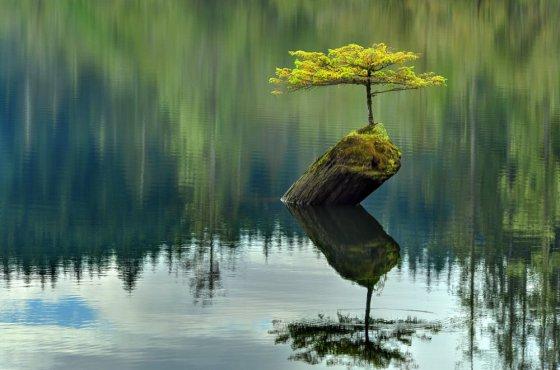 საოცარი სილამაზე: ეული ხე წყალში