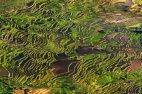 ბრინჯის ტერასები ჩინეთში