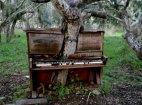 ხე-ფორტეპიანო, მონტერეი, კალიფორნია.