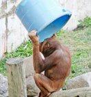 """მსოფლიო დონის წამოწყებას მაიმუნი ხომ არ """"ჩამორჩებოდა""""!"""