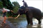 ეშმაკი სპილო