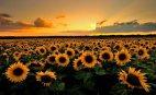 ლამაზი მზის ჩასვლა