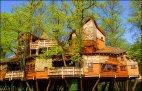 სახლი ხეზე