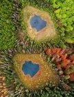 ტყე ტბის გარშემო ზაფხულში და შემოდგომაზე(პოლონეთი)