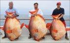 გიგანტური თევზები