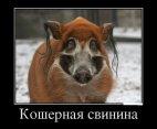 რა უცნაური ღორია