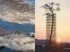 იაპონიაში ცუნამის შემდეგ ერთადერთი გადარჩენილი ხე 50000-ს შორის