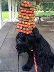 პოზიტიური განწყობისთვის - რეკორდსმენი ძაღლი