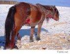 ეს ცხენი მთელი ღამე იცავდა  თავის რემას მგლების  შემოსევისაგან