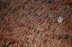 გულშემატკივრები რომა- ბავარიის მატჩის დროს ჩემპიონთა ლიგაზე