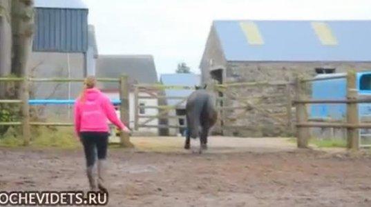 """ცხენს ვარჯიში მობეზრდდა და თავს """"უშველა""""."""