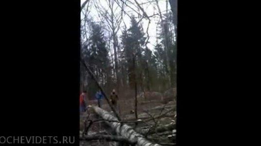 """იდიოტმა """"ტყისმჭრელებმა"""" მეგობარი ლამის იმქვეყნად გაისტუმრეს."""