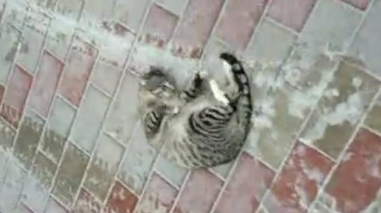 """ამ კატას ეტყობა სისხლი """"უდუღს""""."""
