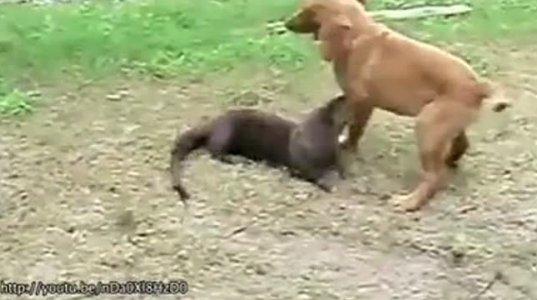 ცხოველების 23 დაუჯერებელი მეგობრობა