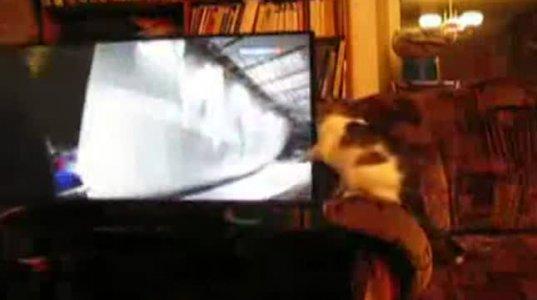 """კატა  ბობსლეისტებს """"იჭერს""""  ტელევიზორის ეკრანზე"""