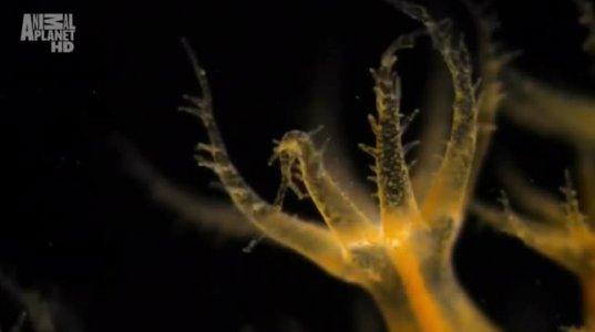 გამაოგნებელი ბუნება • წყალქვეშა სამყარო