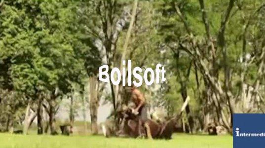 იოგა ახლა უკვე ცხენებისთვის - გამაოგნებელი სანახაობა