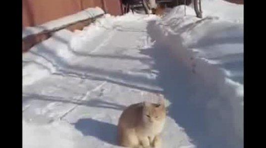 კატა ნინძა