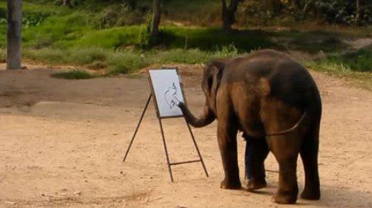 სპილო საკუთარ პორტრეტს ხატავს