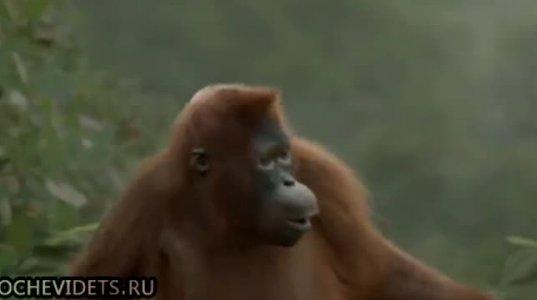 ყველაზე პოზიტიური მაიმუნი.