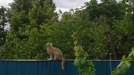 რა თავხედი  ჩიტია-გააშტერა  კატა