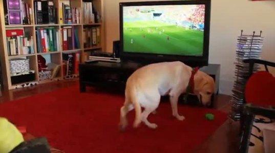 ძაღლი პორტუალიის გავარდნას განიცდის