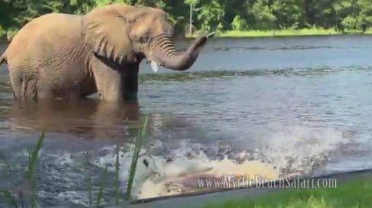 საუკეთესო მეგობრების (ძაღლი და სპილო) გართობა წყალში