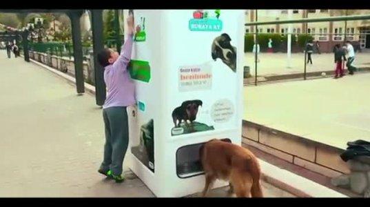 ავტომატი  უპატრონო ძაღლებს კვებავს