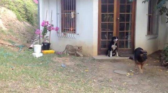 და ამ ყველას შინაური ცხოველები ჰქვია??