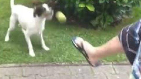 ჩვენი ნაკრების მეკარეზე კარგად იღებს ბურთებს ეს ძაღლი