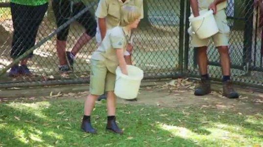 სტივ ივრინის 10 წლის ვაჟი და crocodile