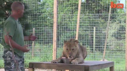 ოჯახი რომლებიც ინახავენ 6 ვეფხვსა და 2 ლომს