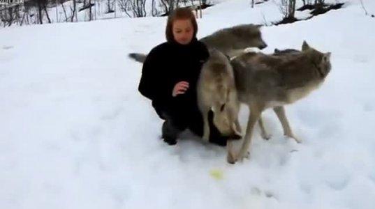 მგლებსაც ახსოვთ სიკეთე