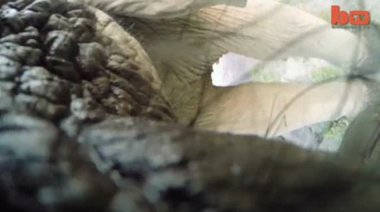 სპილოს კამერა არ მოეწონა და შეუტია