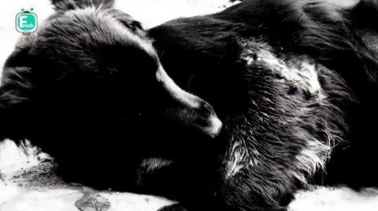 დაცხრილული ძაღლი