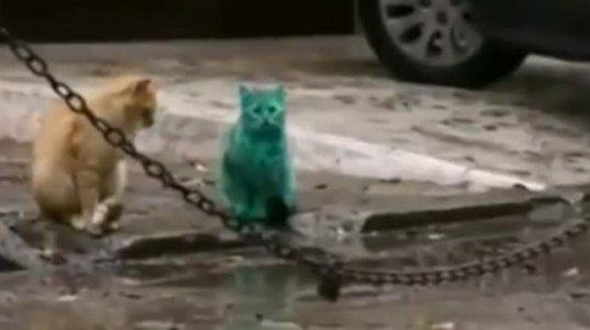 უცნაური მწვანე კატა