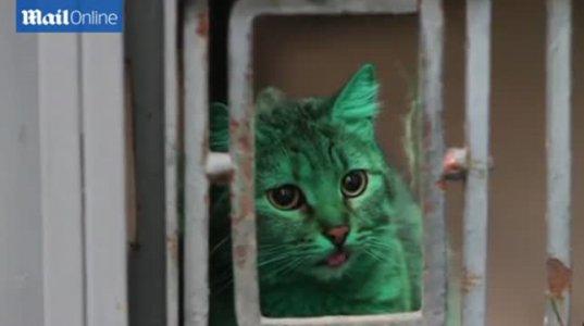გასაოცარი მწვანე კატა