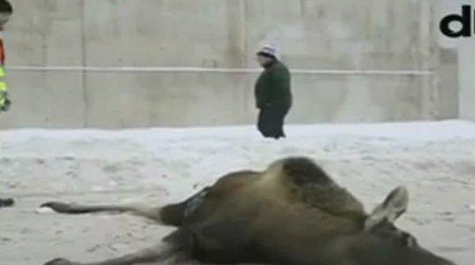 ვიდეო თვალმა ეს შემზარავი კადრი რუსეთში დააფიქსირა